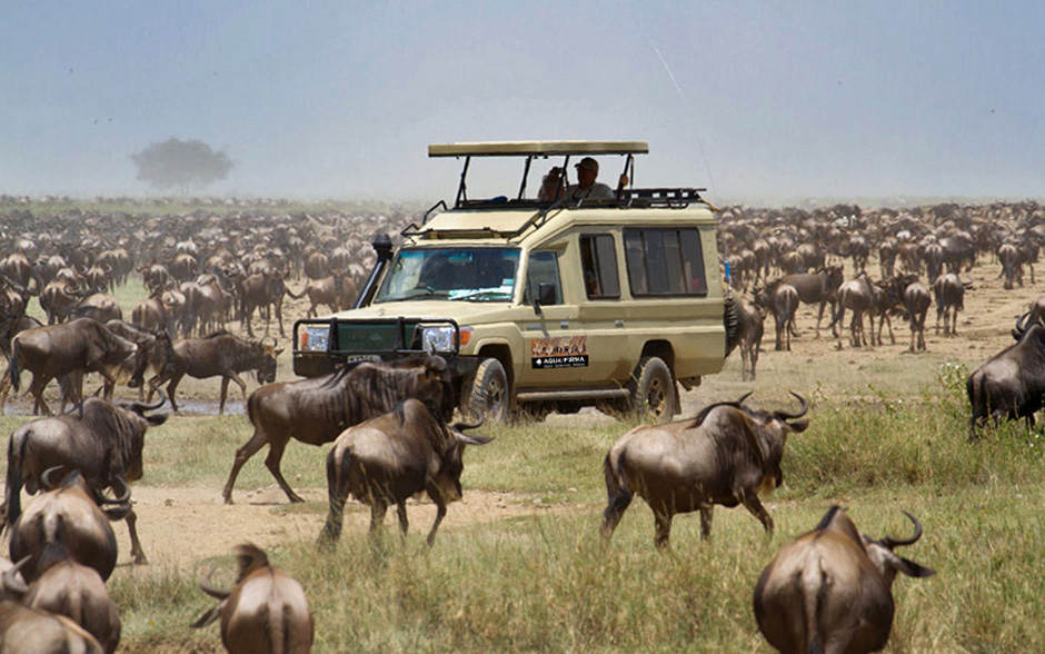 Aqua-Firma on a Great Migration Safari in Tanzania