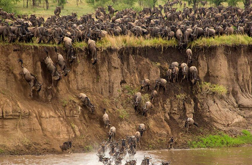 Mara River Crossing - Bob Madden